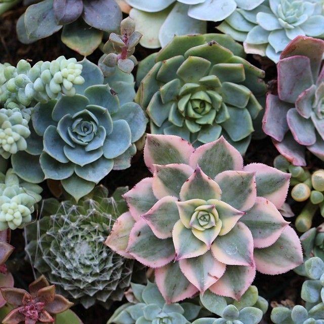 Succulent topshot photo by Dalla Vita.