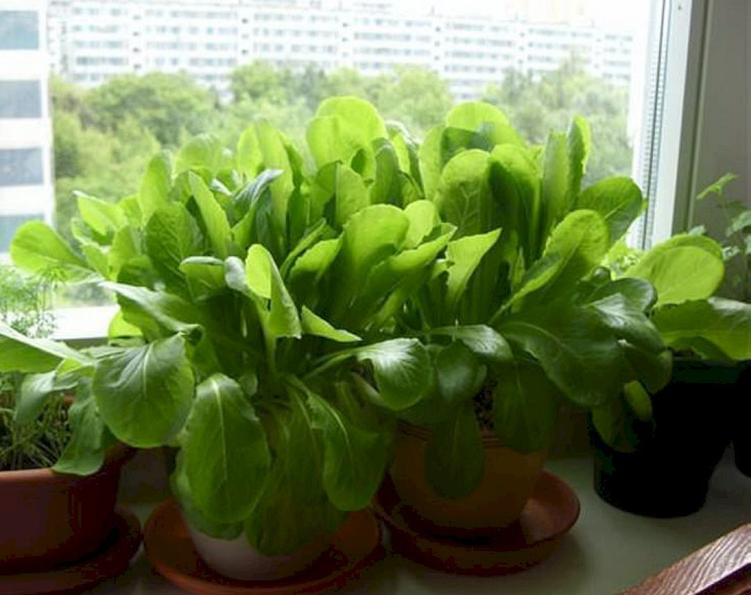 15 Best Indoor Herb Garden Ideas For Your Small Home And 400 x 300
