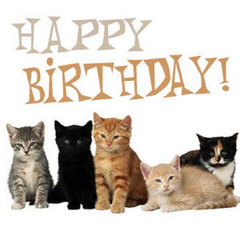 Found on Bing Cat birthday greetings, Happy birthday