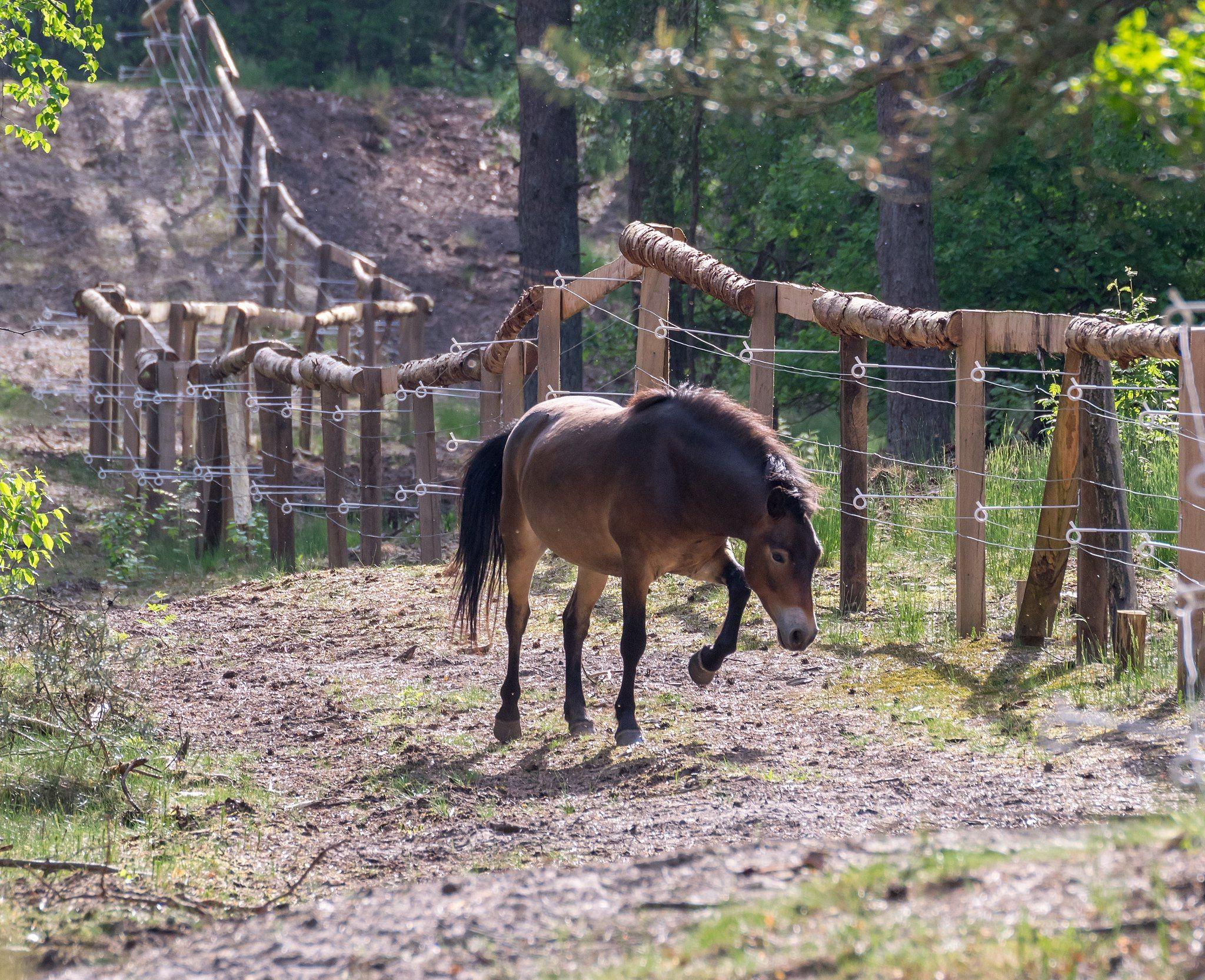 Exmoor Pony Bilderrahmen Vintage Kuchen Munchen Pferderassen