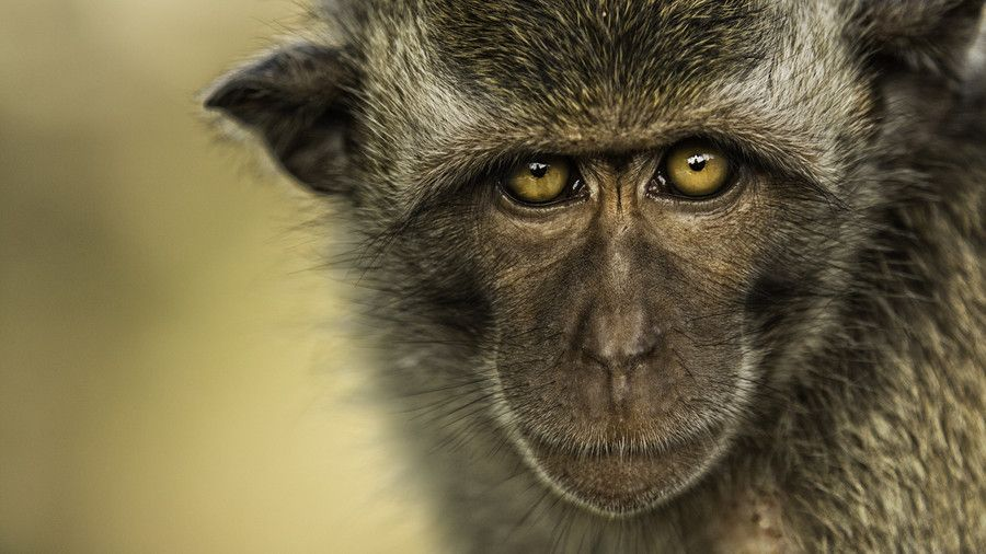 Photo Monkey Closeup by Duane Moore on 500px