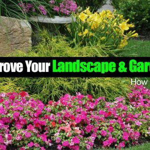 How To Improve Your Landscape & Garden Design, How May Surprise You