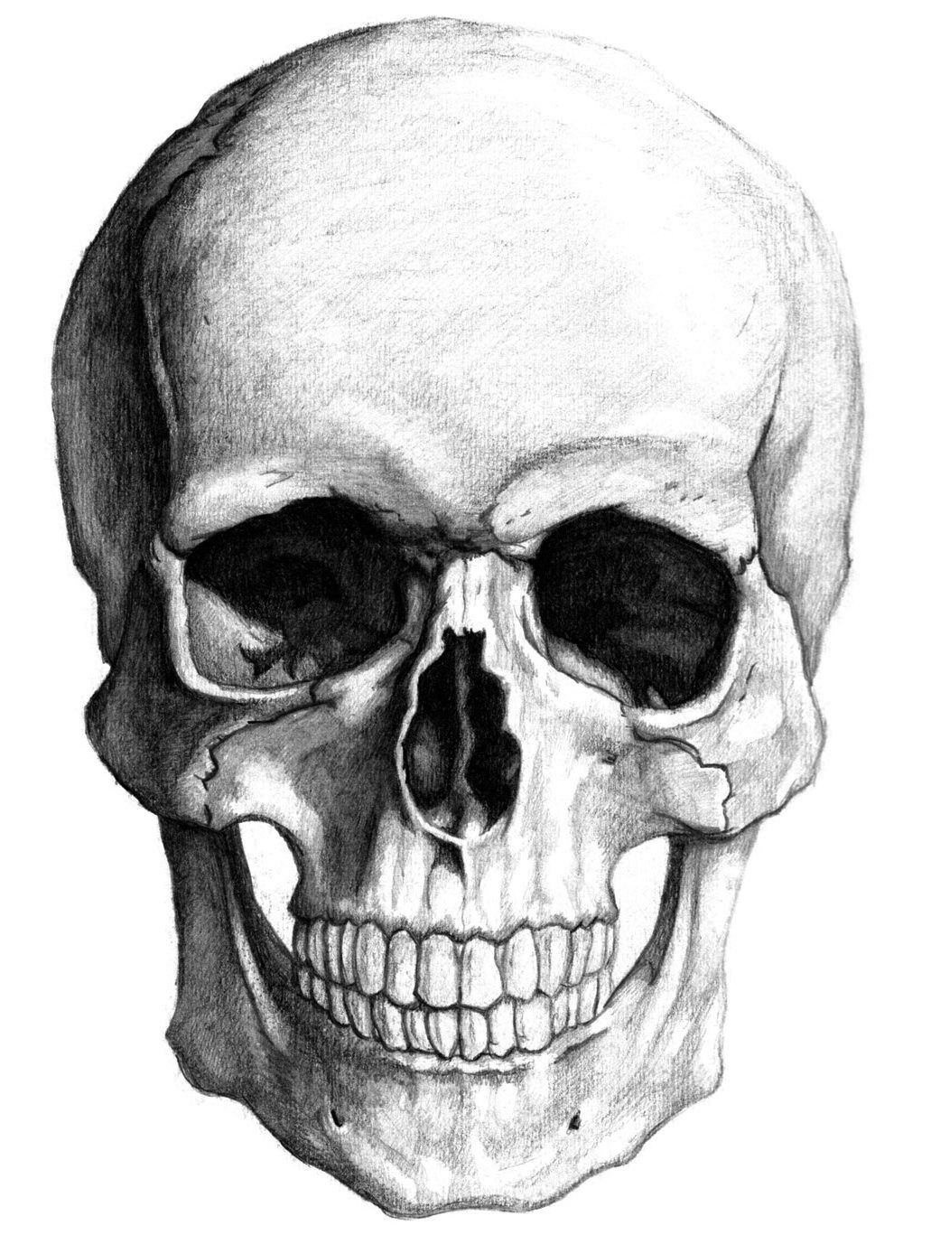 Pin by Joe Cwik on Osteology past and present | Realistic ...