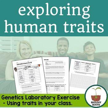 Genetics- Human Traits Lab - new tabla periodica tierras raras