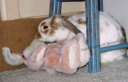 Find out the top three reasons pet bunnies lose their homes and how to prevent this from happening to your pet rabbit.