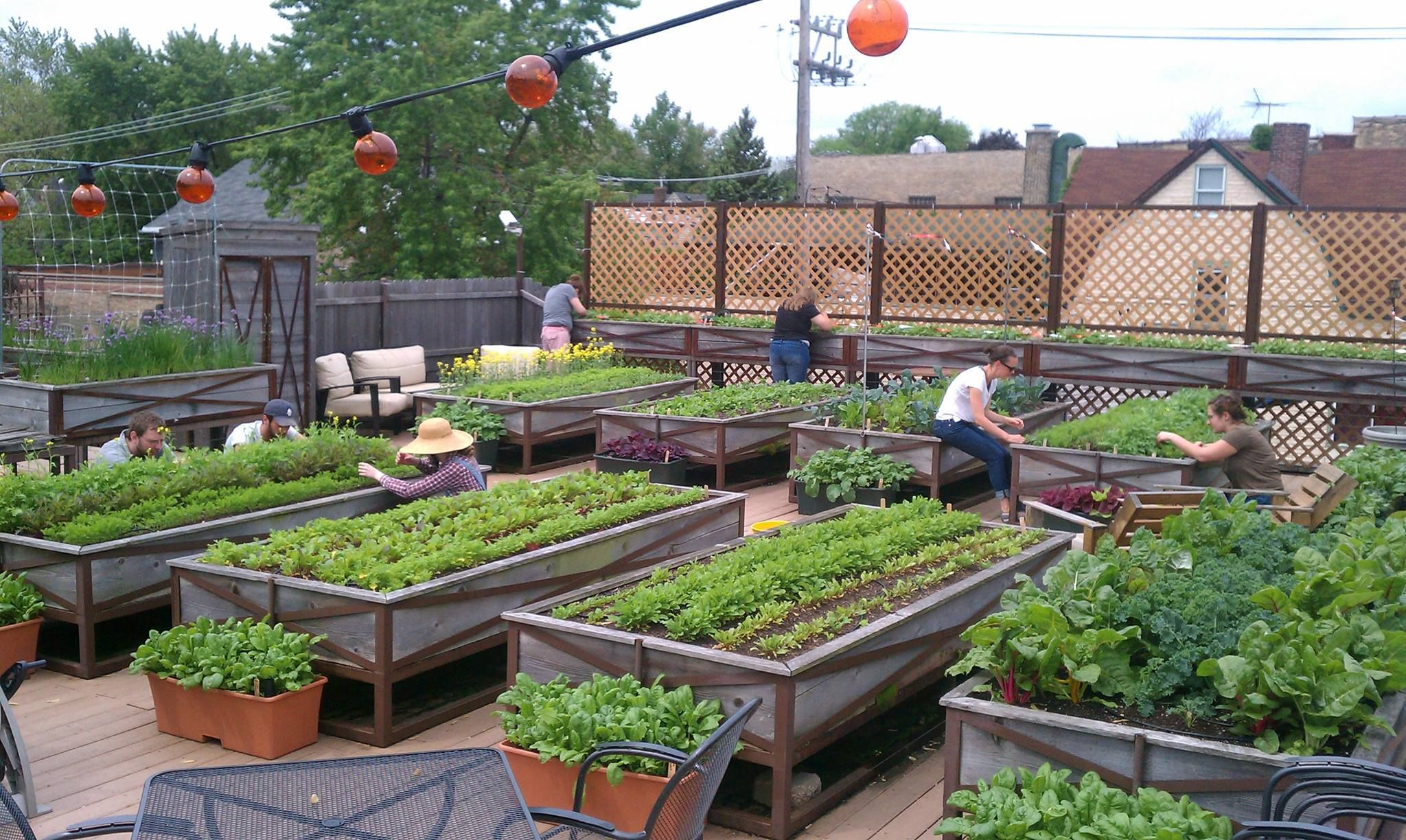 10 Rooftop Vegetable Garden Ideas Most Of The Awesome As Well As