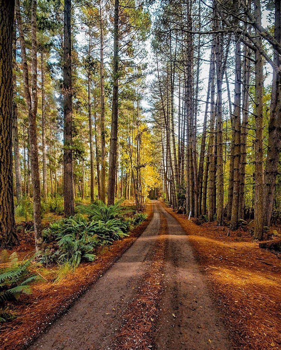 Hollybank Forest Wilderness Adventures Zipline Adventure Forest Reserves