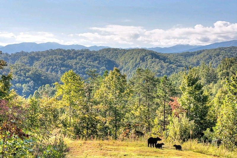 DOLLY BEAR 1 bedroom Cabin in Gatlinburg, TN | Places to Visit ...