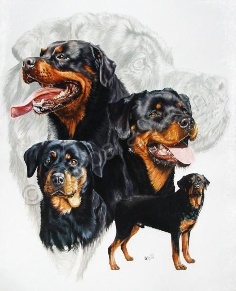 Rottweiler - by Barbara Keith