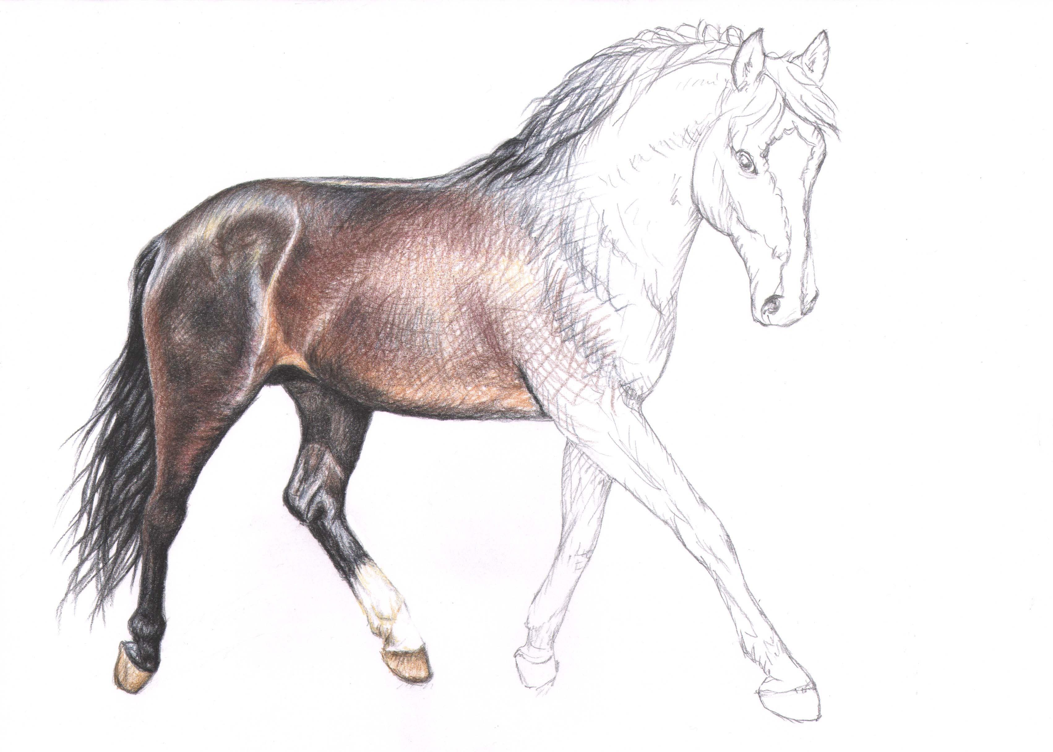 Pferd Zeichnen Bleistift Pferd Malen Anleitung Igiocolandia