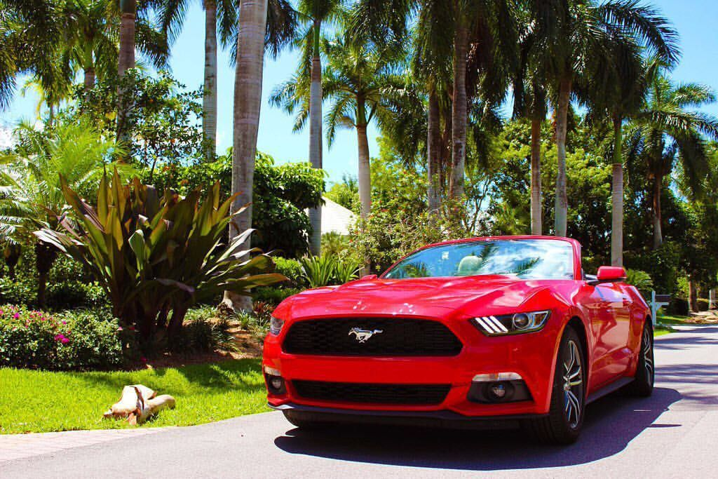 palms around top s down mustangmonday ford mustang fordmustang mustangnation mustanglife palmtrees convert new ford mustang ford motor ford racing new ford mustang ford motor ford racing