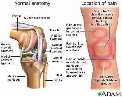 Knee anatomy pain knees pinterest fisioterapia joelho e sade knee anatomy pain ccuart Images