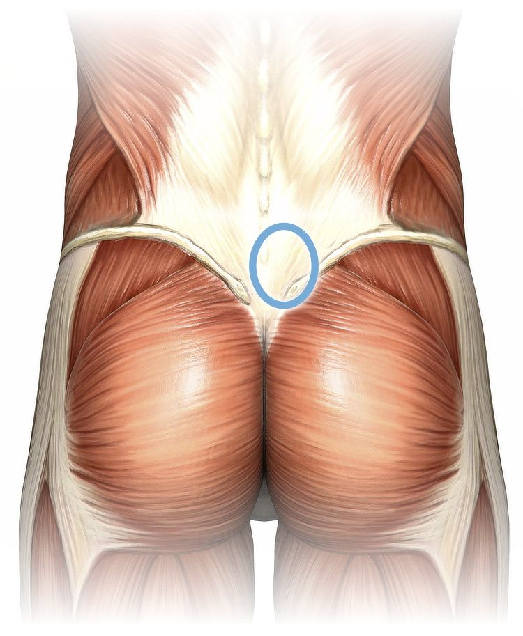 Anatomy Of The Lower Back Superficial Dissection With A Blue