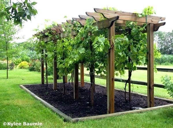 trellis ideas for grapes or trumpet vines arbor   Backyard ...