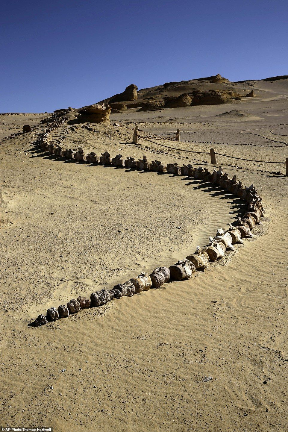 Egypt unveils rare whale fossil museum to boost tourism