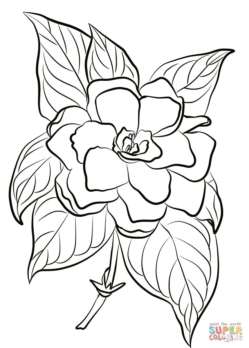 Gardenia Dibujo para colorear. Categorías: Gardenia. Páginas para ...