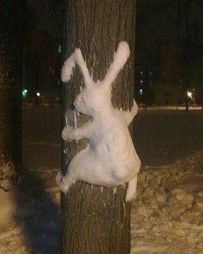 #snowbunny #funnys