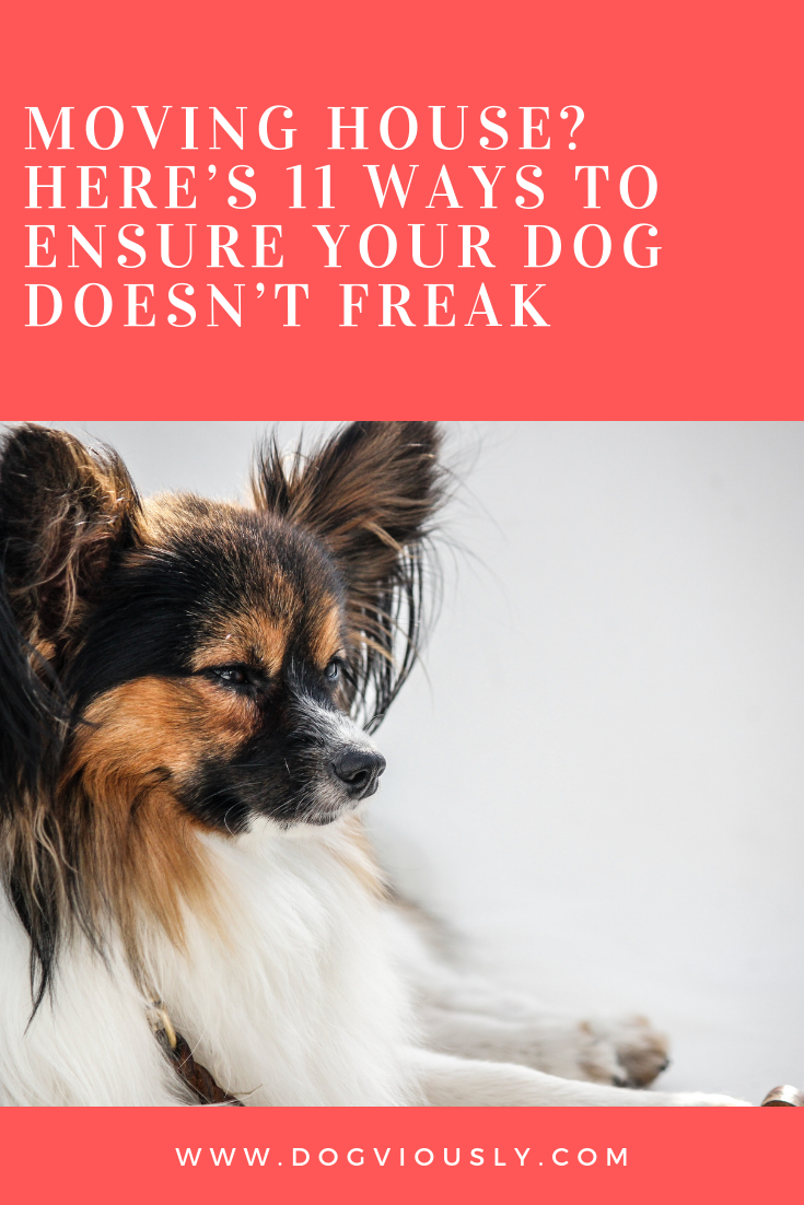 Moving House Here S 11 Ways To Ensure Your Dog Doesn T Freak Dogviously Dog Training Training Your Dog Dog Training Obedience