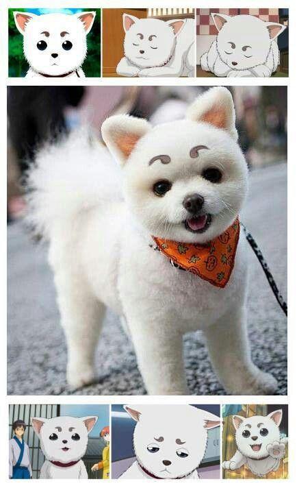 Gintama For Sydney Sadaharu Cute Dogs Cute Animals Cute Puppies