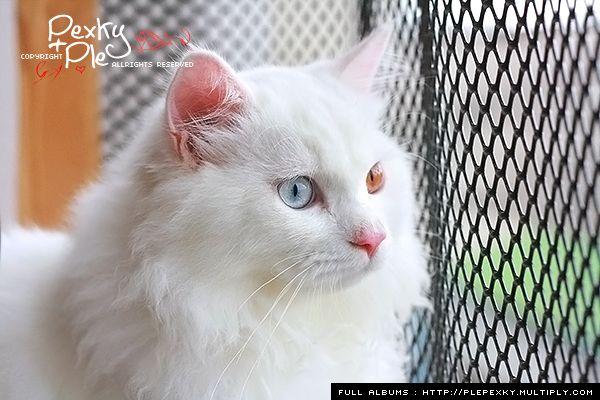 Pantip Com J6869301 ตาข ายหล งคอนโด ทำเร ยบร อยแล ว ถ กใจก นใหญ แมว แมว