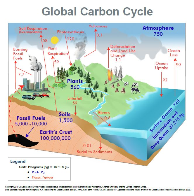 Carbon cycle diagram carbon cycle pinterest cycling carbon cycle diagram ccuart Choice Image