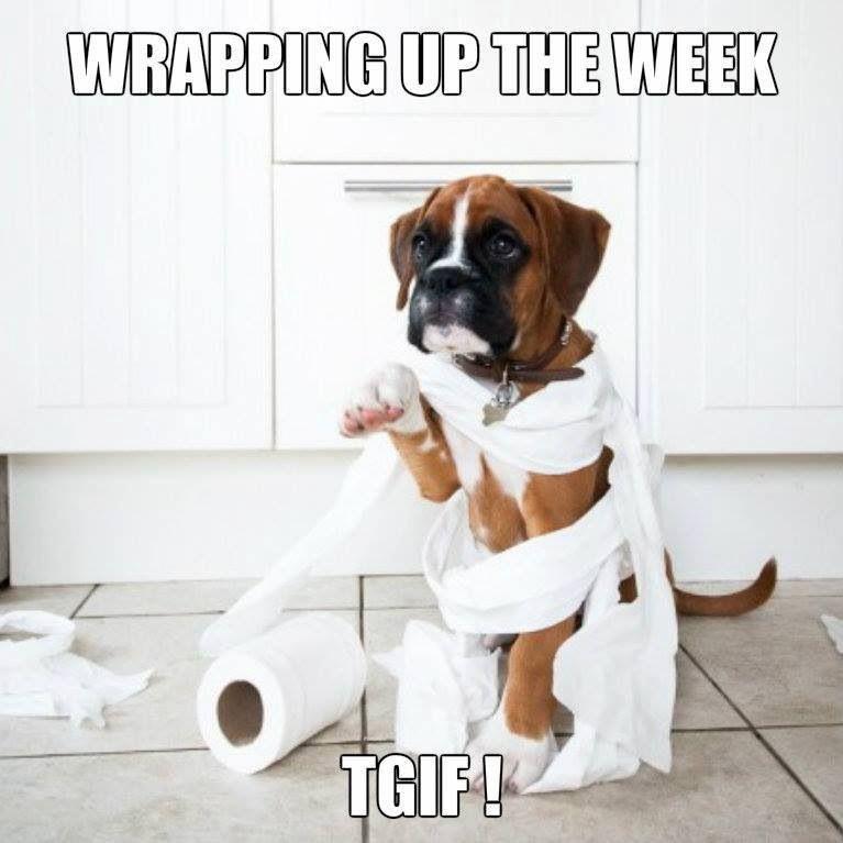friday funniesHappy Friday Animal