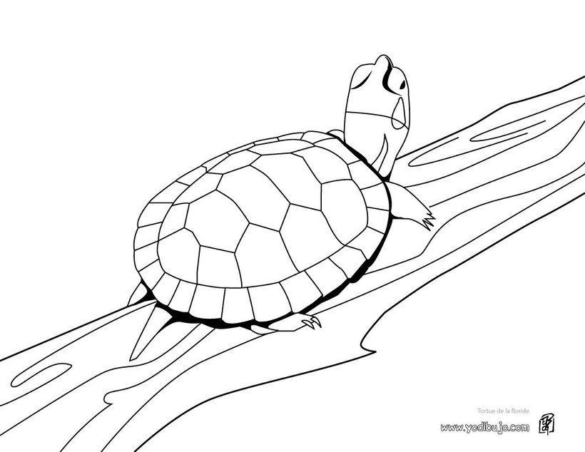 Pintar TORTUGAS MARINAS, Tortuga Verde para imprimir | Repujado ...