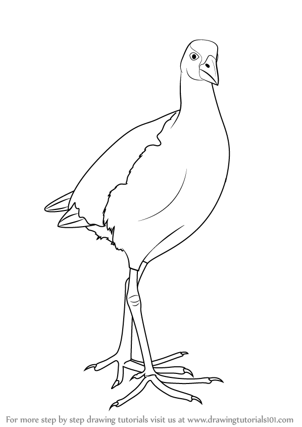 learn how to draw a pukeko birds step by step drawing tutorials