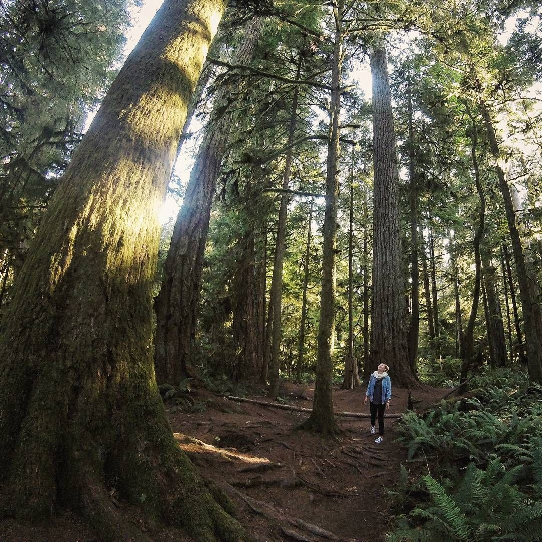 Walking among giants in Cathedral Grove old growth forest. Vancouver Island, British Columbia, Canada. Flights+Barrels Travel Photography.