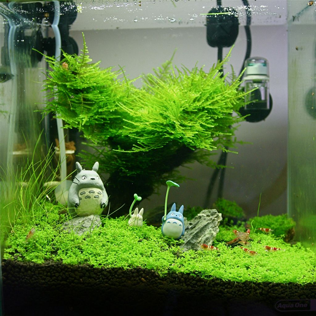 Aquariums And Aquascaping