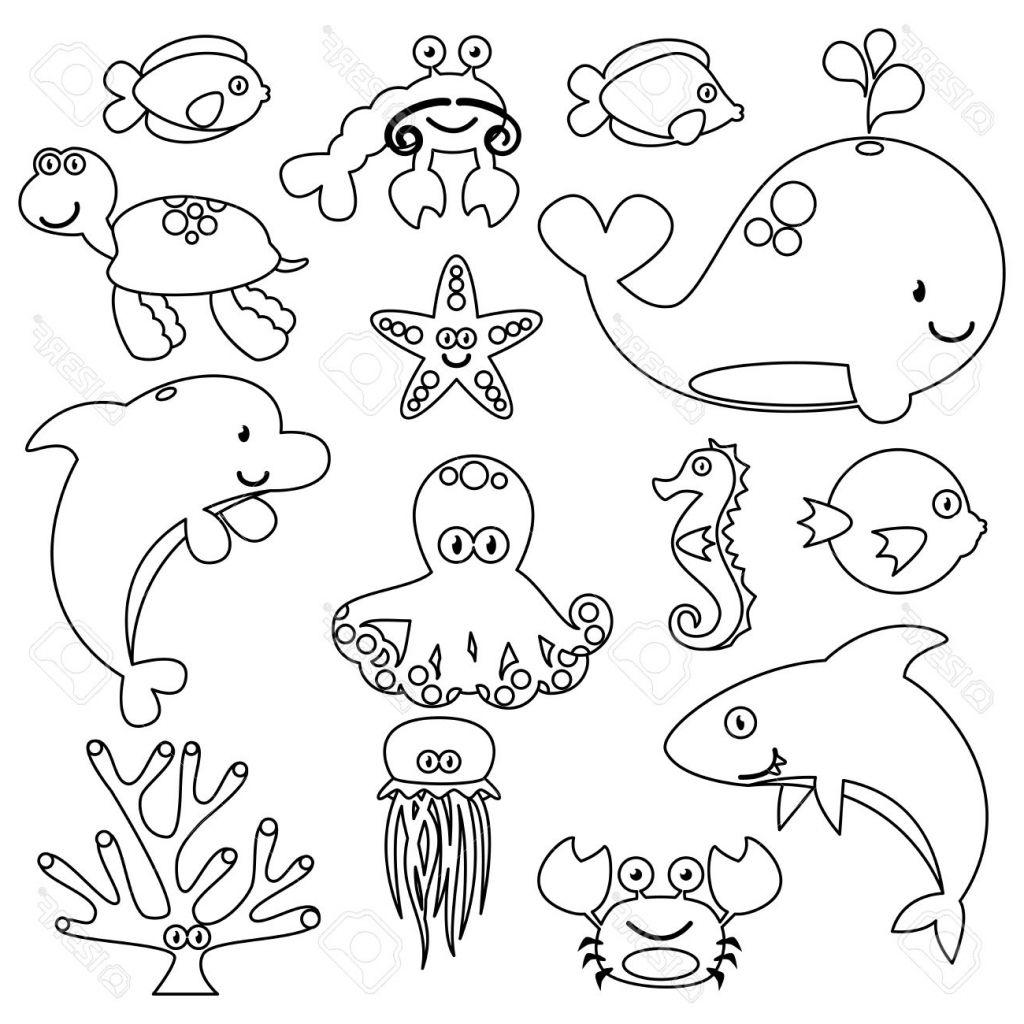 1024x1024 Aquatic Animals Sketches Sea Animals Drawing