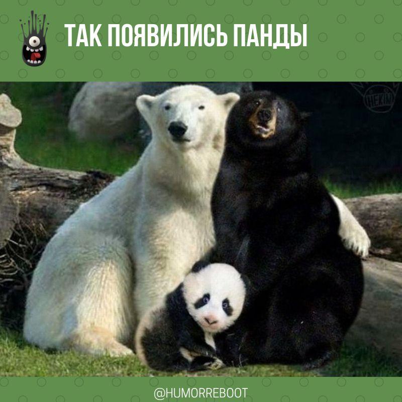 Каждый день у нас свежая порция юмора на русском языке ...