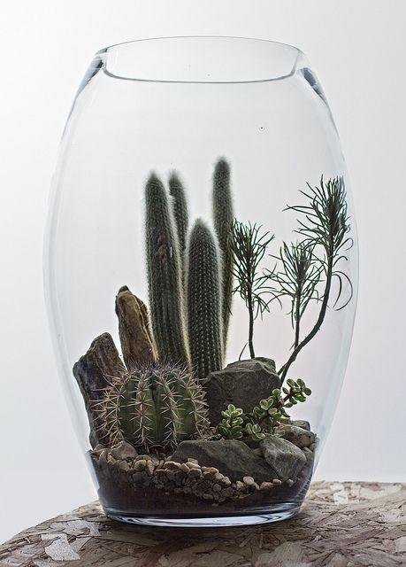Egg Desert Terrarium Mini Jardins Terrarium Pour Plantes