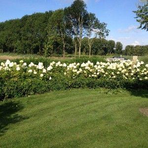 Tuinen tuin onderhoud hovenier snoeien siertuin for Tuin snoeien