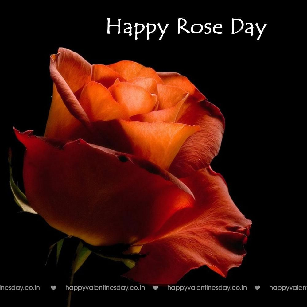 Rose Day Happy Valentines In Japanese