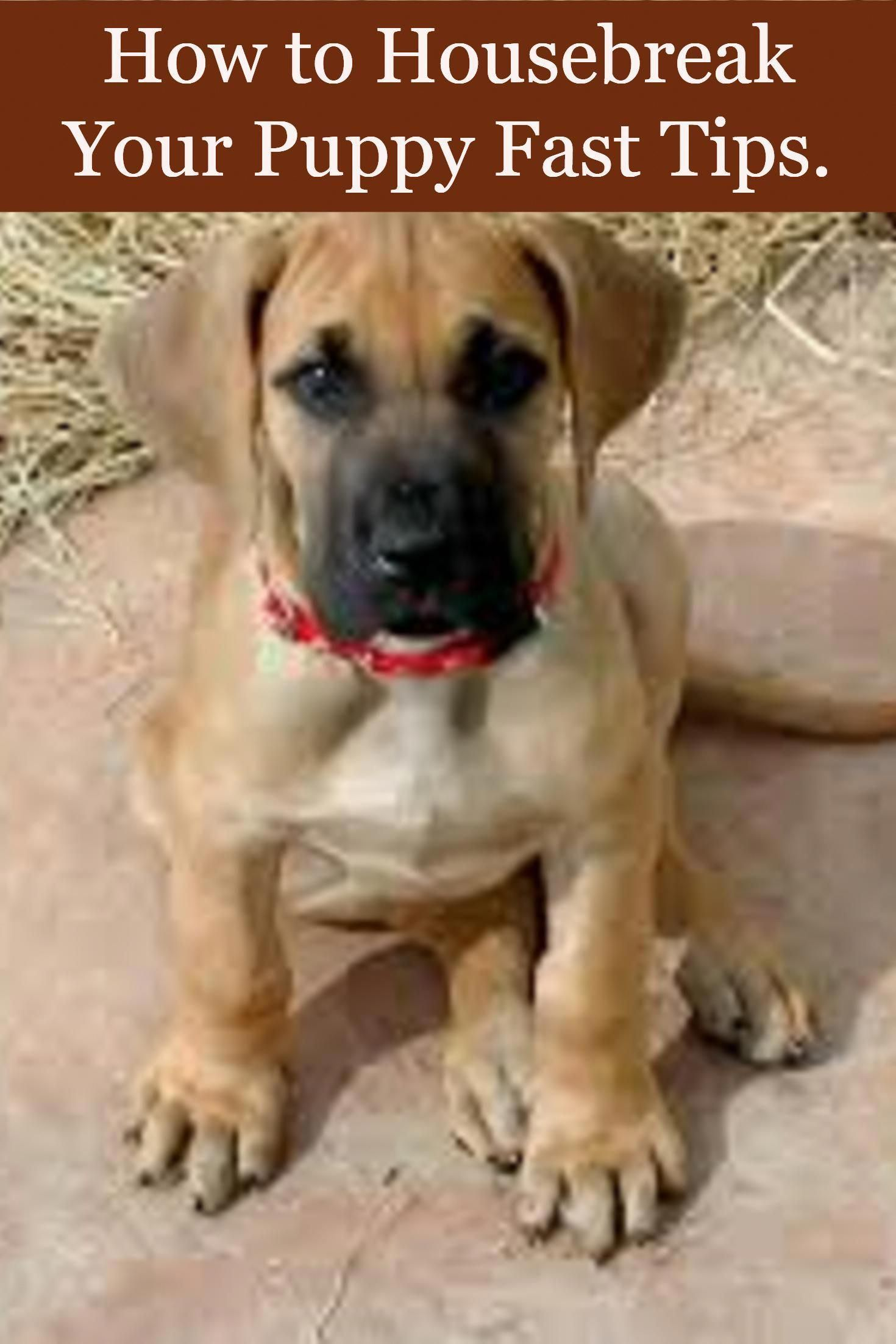How To Housebreak Your Puppy Fast Tips How To Housebreak A Puppy
