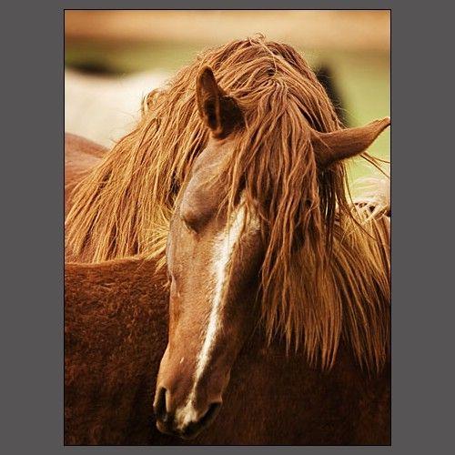 i will have horses