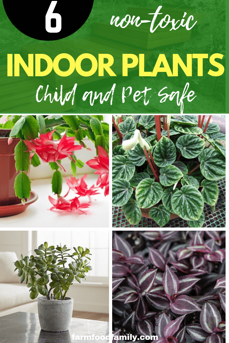 Child and Pet Safe Houseplants: 6 Non-Toxic Indoor Plants ...