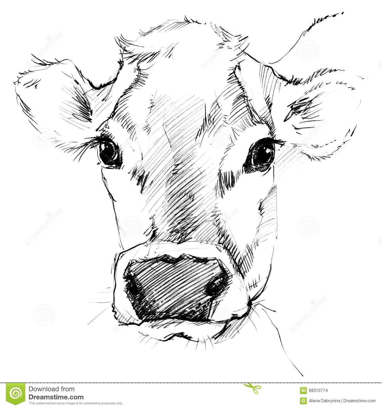 Cow pencil sketches pencil drawing of cow head royalty free stock