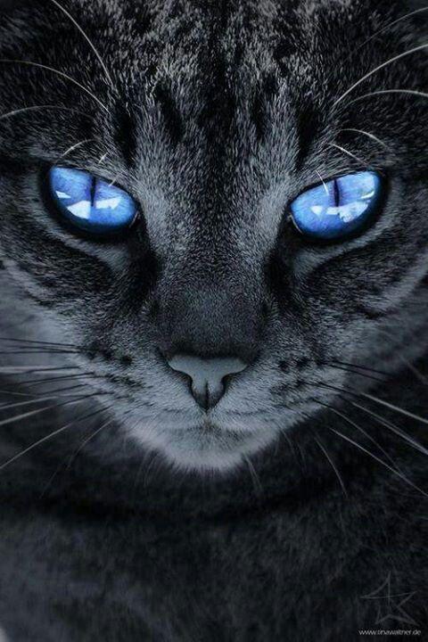 Katze Mit Blauen Augen Animals Katzen Baby Katzen Und Tiere