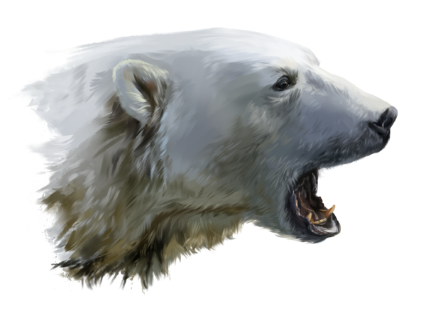 A Polar Bear Growls By Kajenna Deviantart Com On Deviantart Polar Bear Art Polar Bear Polar Bear Tattoo