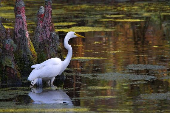 White Egret Dark Swamp by mljart on Etsy, $25.00