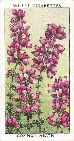 Common Heath In 2020 Heather Flower Vintage Flowers Domino Art