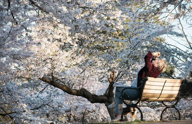 Who Art In Heaven Park Toronto Diy Photography