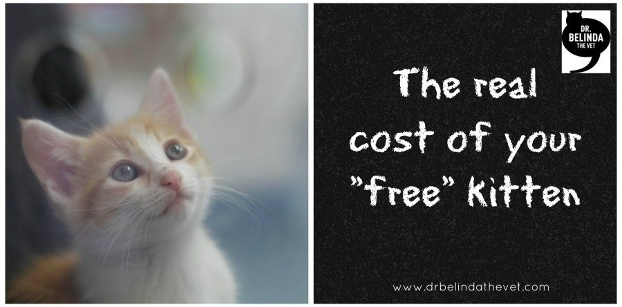 The Real Cost Of Your Free Kitten Kittens Pet Health Care Pet Ownership
