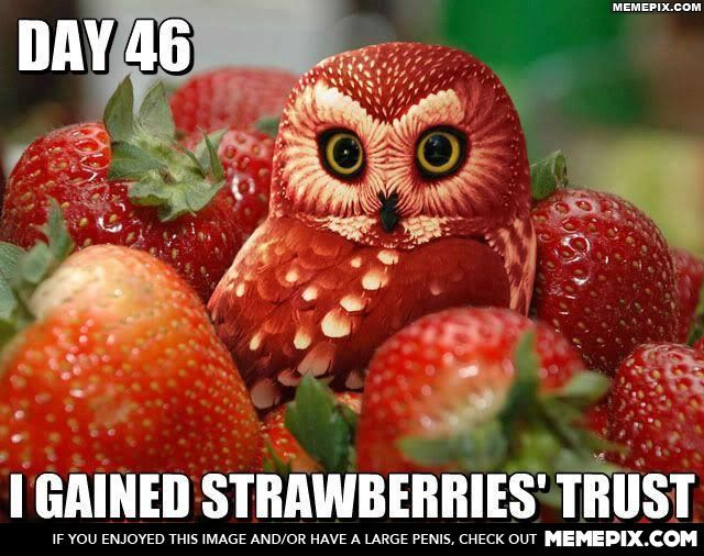 owlberry