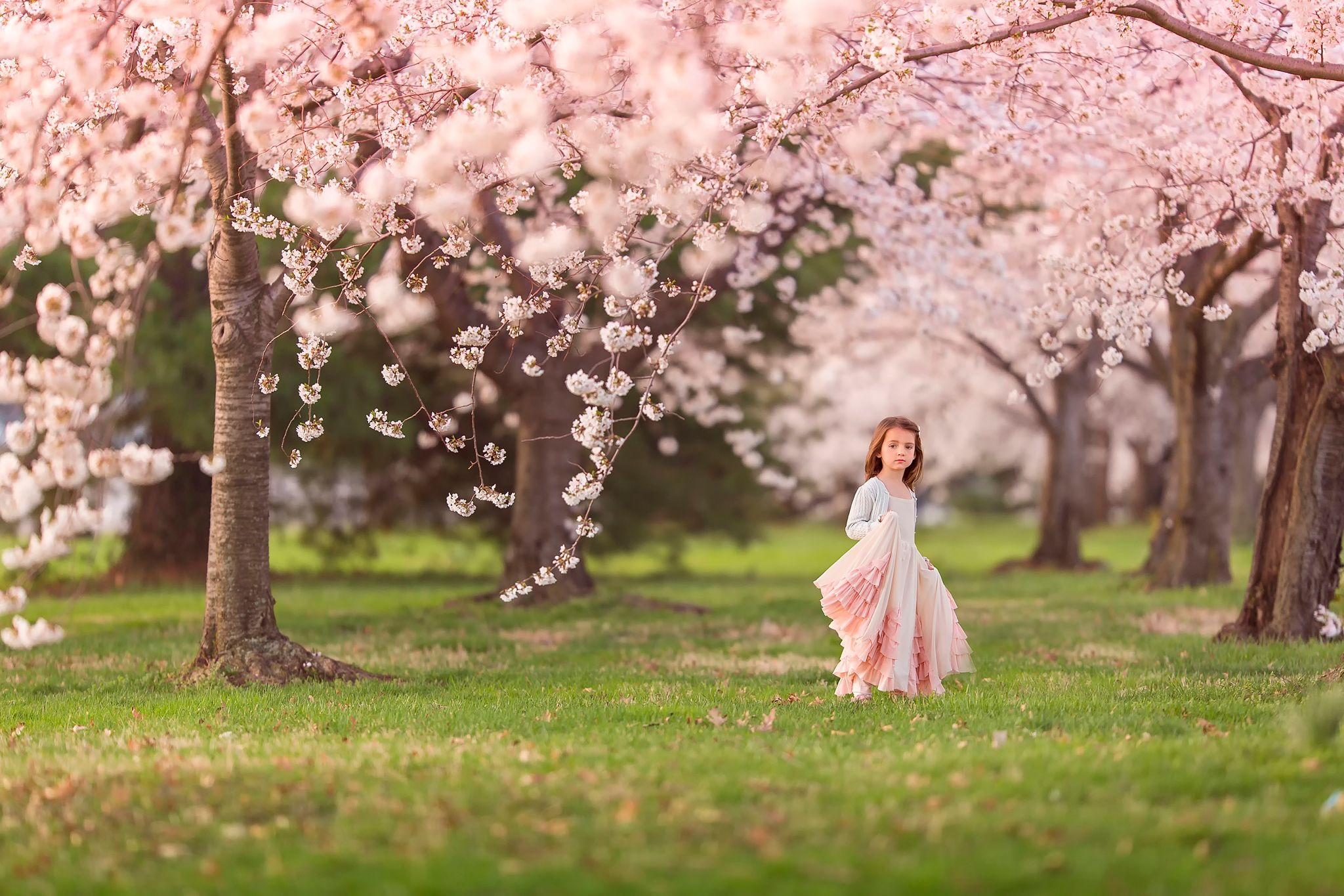 Spring Dress Child Pink Green Tree Little Hd Wallpaper 1970363 2 Cherry Blossom Pictures Spring Family Pictures Spring Pictures