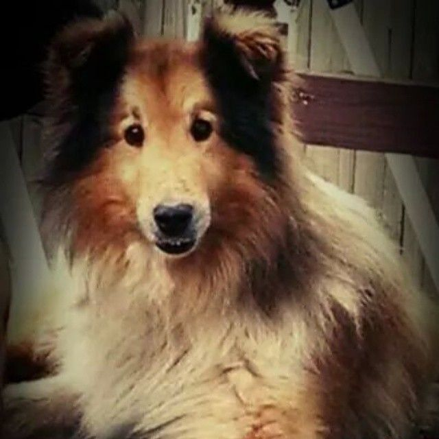 Lost Dog Collie Ashtabula Oh United States 44004 Losing A