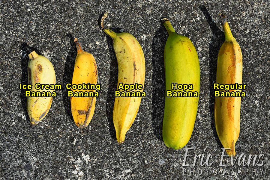Big Mamas Tropical Fruit Types Of Banana Sizes Photo
