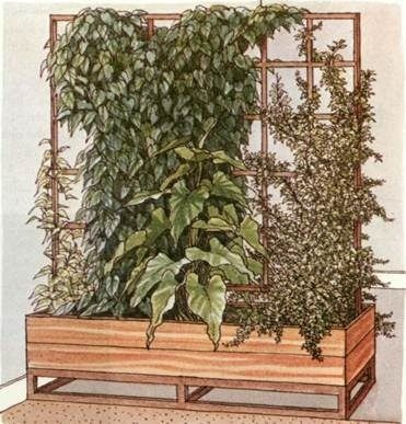 Climbing plants as room dividers Plants Pinterest Divider